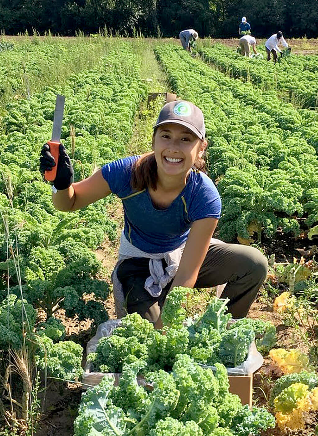 Yenny Martin harvesting boxes of curly kale