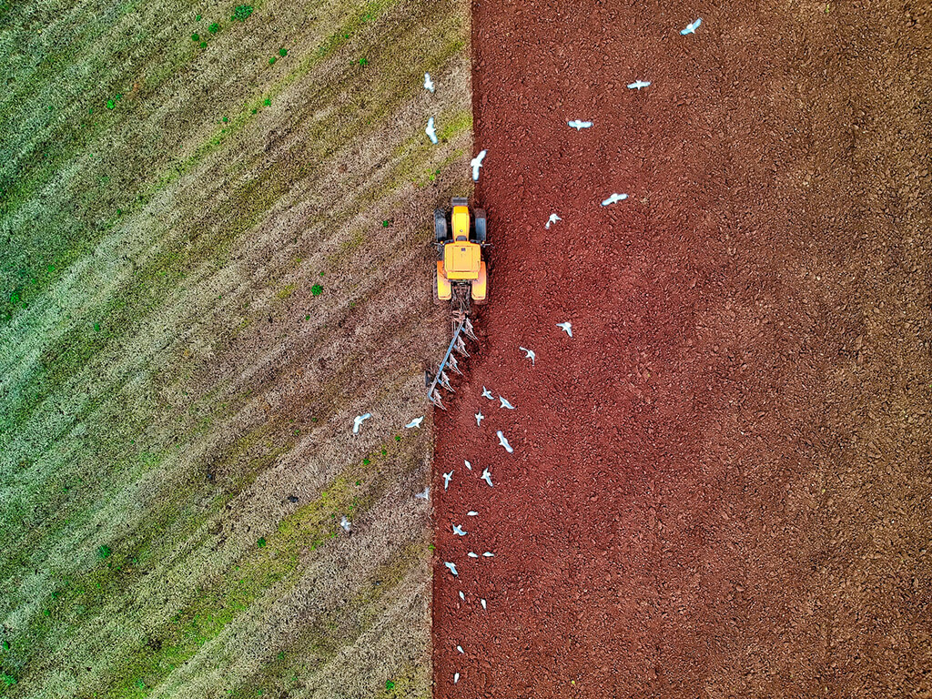 A tractor clearing cover crop on a large farm, while a flock of birds fly overhead