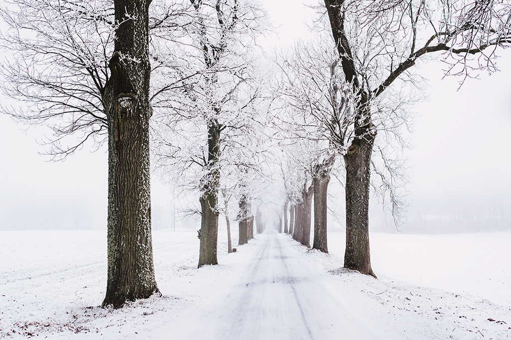 A snowy road flanked by snowy trees